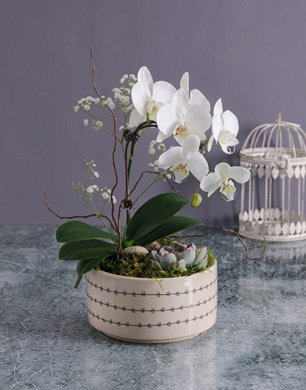 Midi Orchid Garden In A Pot
