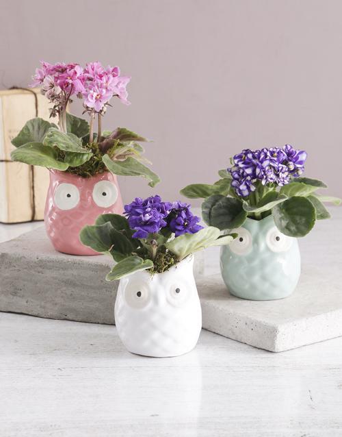 African Violet in Owl Pot