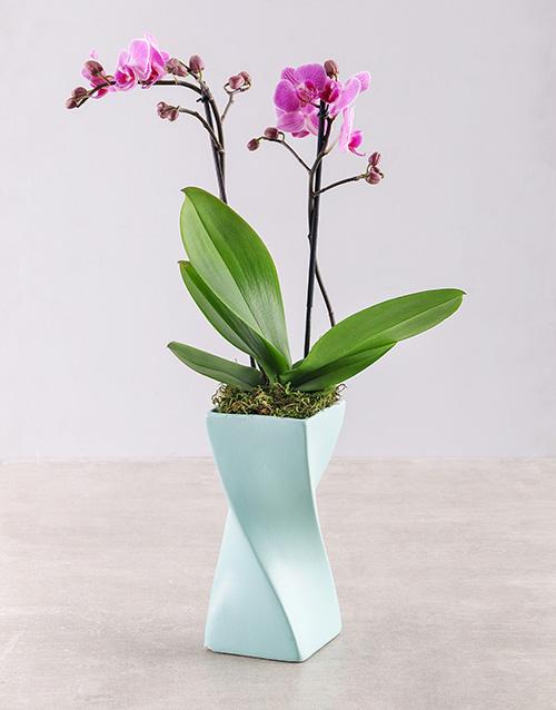 Midi Orchid in a Blue Ceramic Twisty Vase