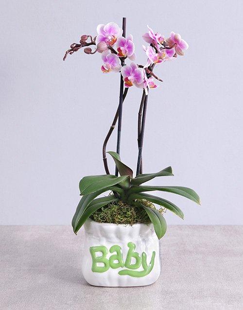 Midi Phalaenopsis Orchid in Green Baby Vase