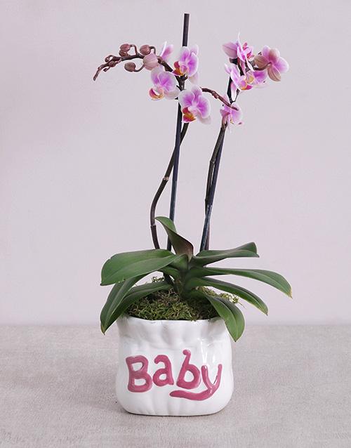 Midi Phalaenopsis Orchid in Pink Baby Vase