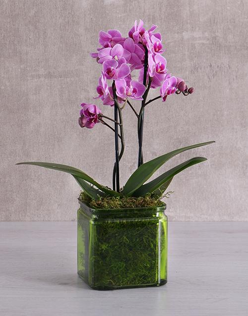 Mini Orchids in a Square Green Vase