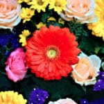Birth Month Flowers and Their Meaning