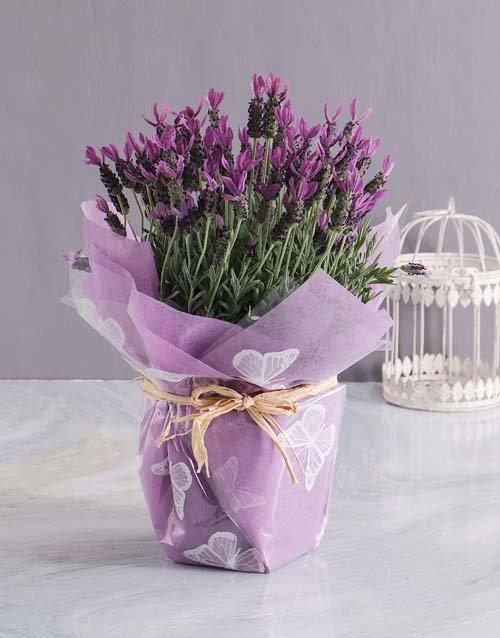Lavender Licious Surprise