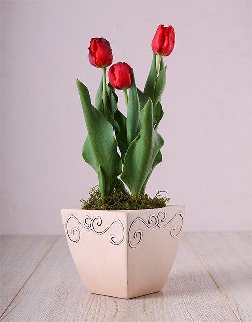 Red Tulips in Ceramic Pot