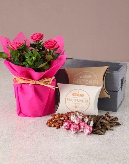 Cerise Rose Bush Hamper For Mum