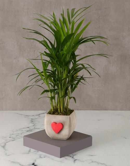 Heartfelt Bamboo Pot For Mom
