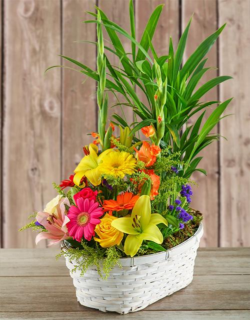 birthday Plant with Flower Arrangement in a Basket