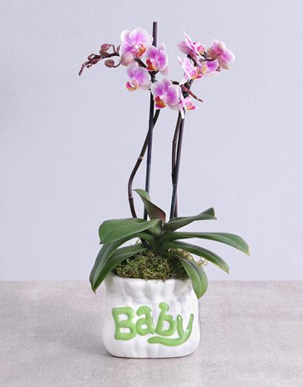 baby Midi Phalaenopsis Orchid in Green Baby Vase