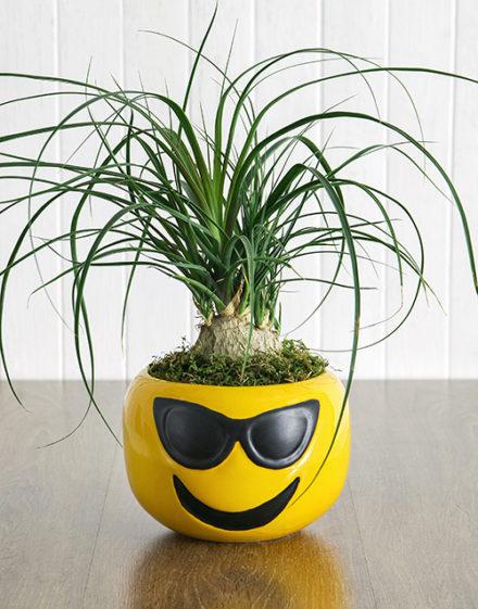 fathers-day Pony Tail Palm in Sunglasses Emoji Pot