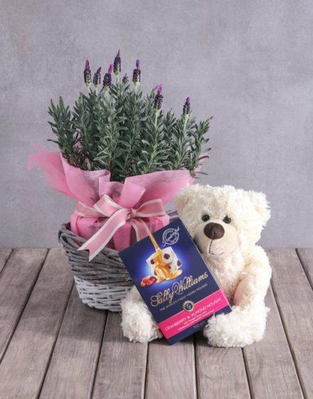 baby Teddy Bear Lavender Basket