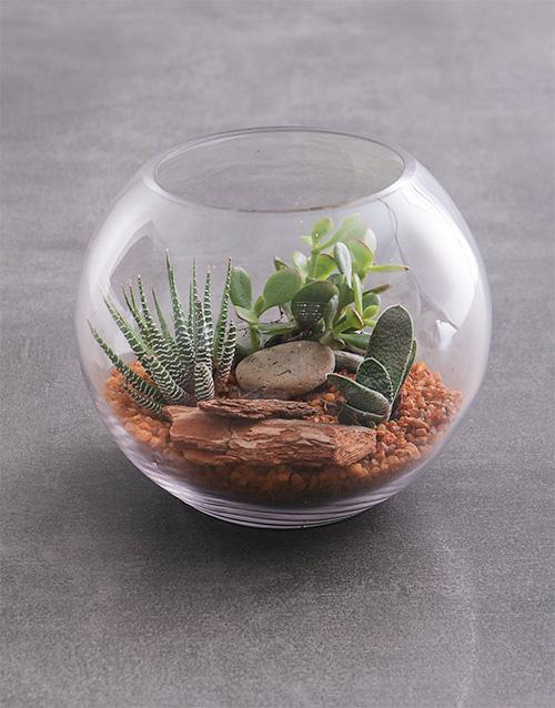 fathers-day Large Succulent Fish Bowl Terrarium