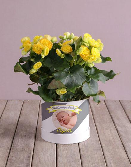baby Personalised Begonia Baby Arrangement
