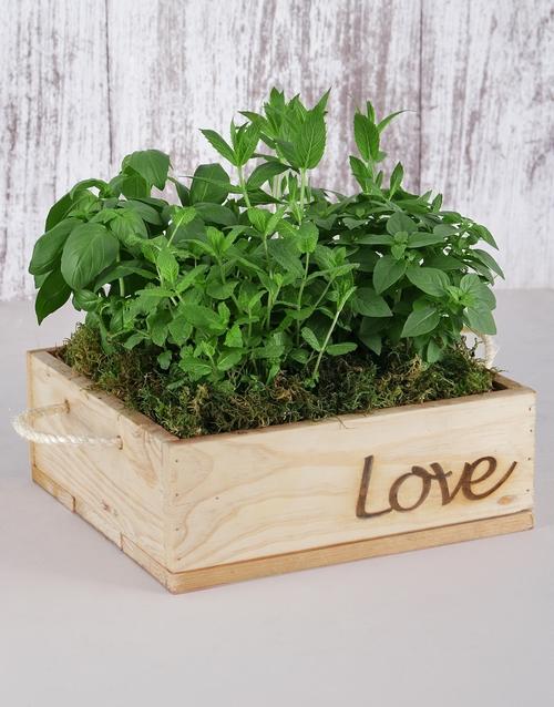 birthday Herb Garden in Wooden Flower Box