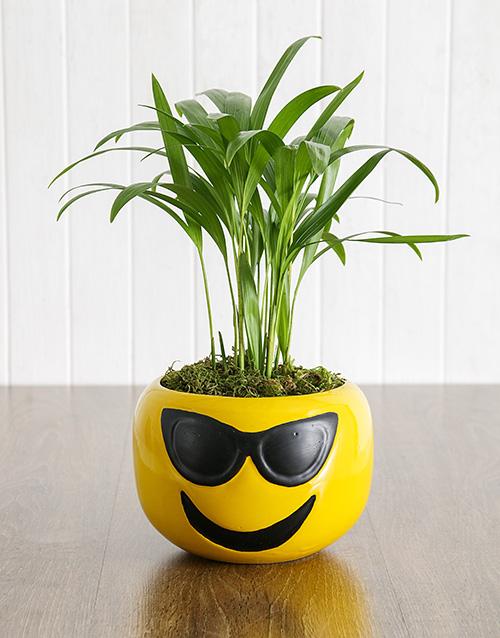 birthday Areca Bamboo in Sunglasses Emoji Pot