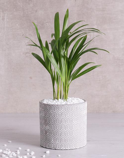 birthday Love Palm in Grey Vase