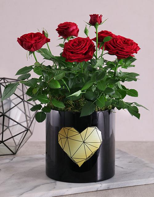 roses Golden Heart Potted Rose Bush