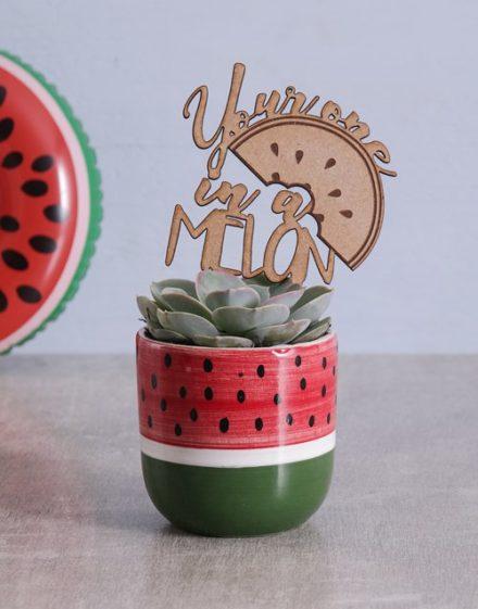 birthday Succulent in Watermelon Pot