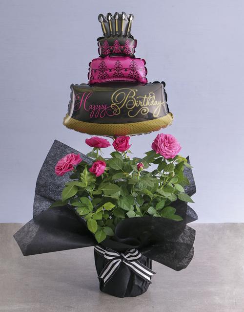 roses Elegant Cerise Rose Bush Wrapped In Black