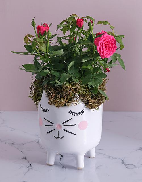 roses Rose Bush in Kitty Vase