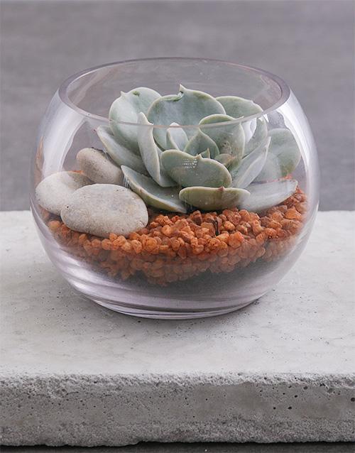 birthday Small Succulent Fish Bowl Terrarium