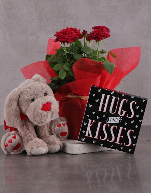 roses Red Rose Bush Delight