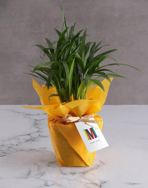 birthday Personalised Cheerful Areca Bamboo