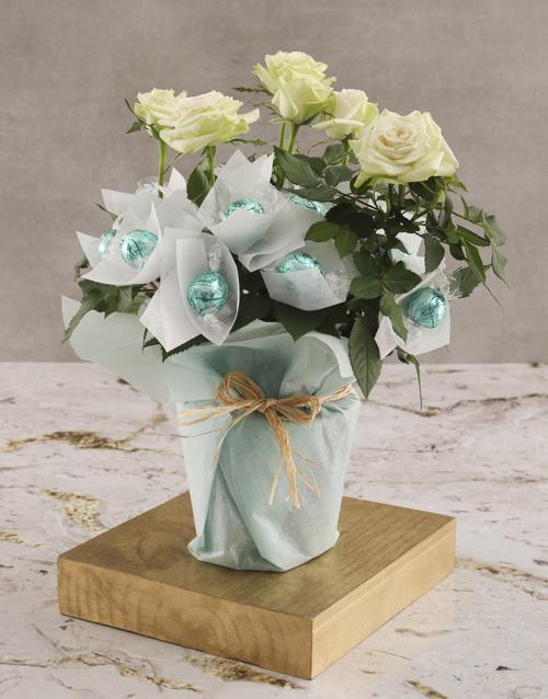 roses White Rose Bush And Chocolates