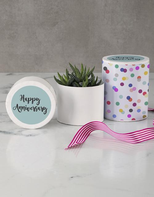 birthday Happy Anniversary Succulent In A Hat Box