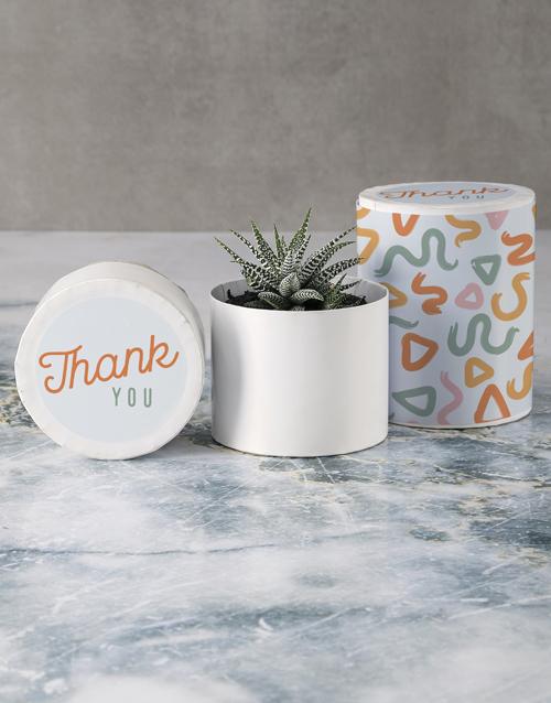 birthday Gratitude Succulent in Hatbox
