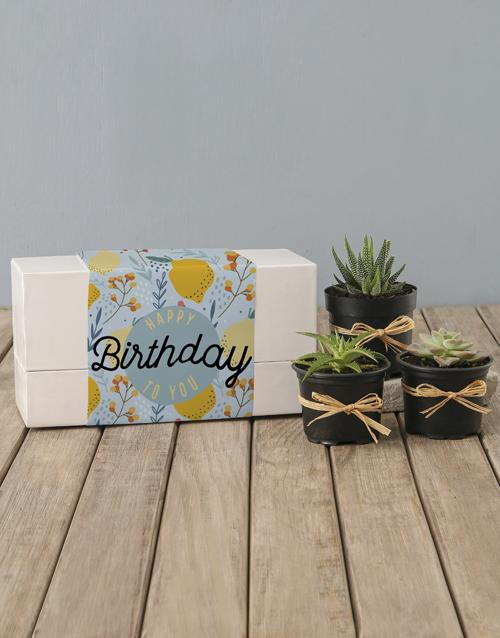birthday Lemon Succulent Birthday Box