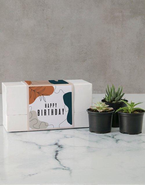 birthday Succulent Birthday Box