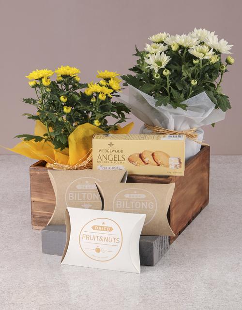 birthday Duo of Chrysanthemum Gourmet Gift Set