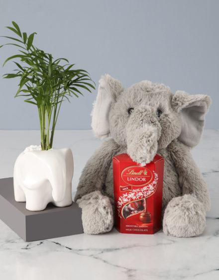birthday Elephants Love Plant Hamper