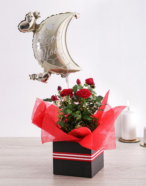 roses Moon and Back Rose Bush Box