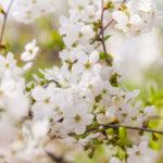 Spring Day Celebration! Send Spring Day Flowers For Endless Joy